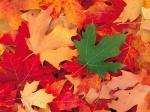 1253542175-automne-12.jpg
